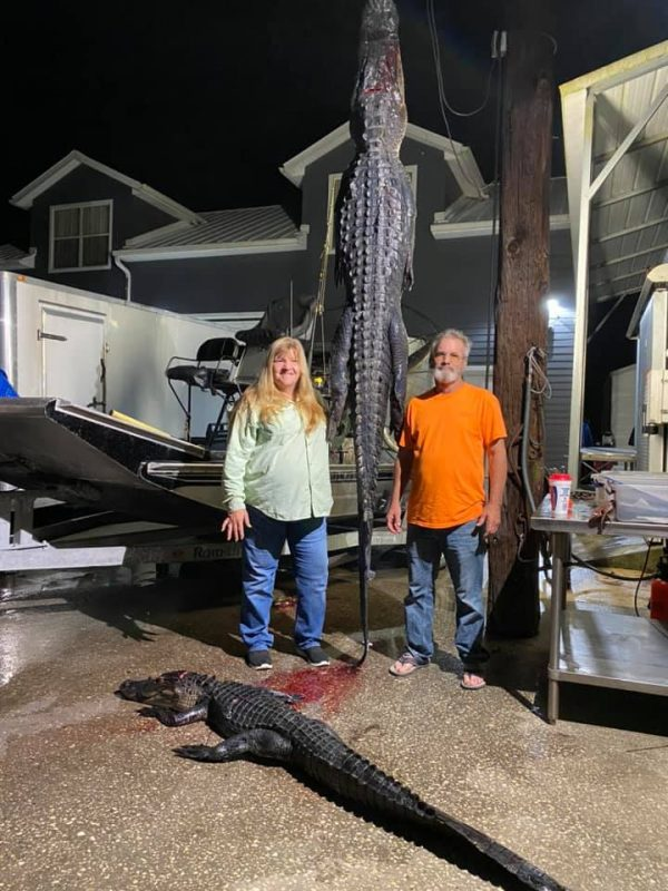 Sonnny came in for WPB and harvested two nice gators with he...