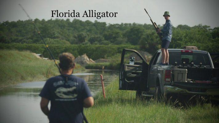 Frontier Unlimited: Florida Alligator