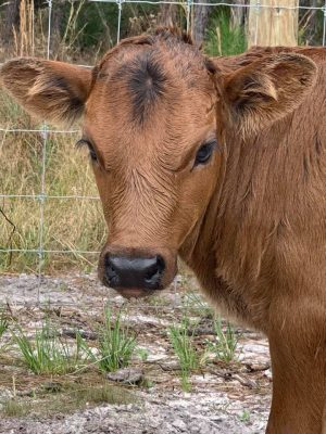 We want to welcome our newest addition to the   P4 Ranch Fam...