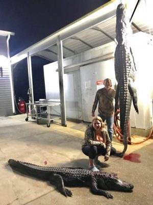 """Two gators in the boat, the biggest was 11'10"""". Capt. Grayso..."""