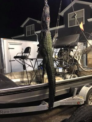 Another awesome hunt last night on Lake Jesup with Brian and...